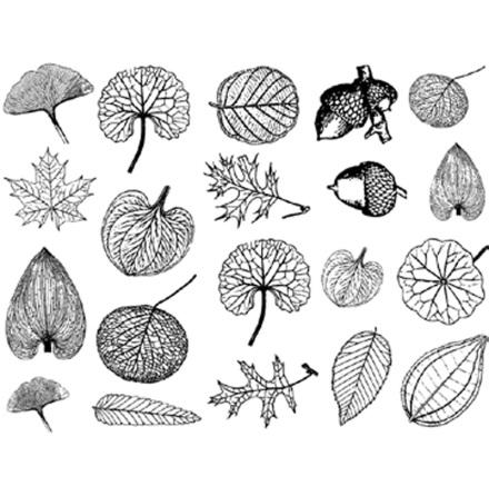 Små blad - Platina