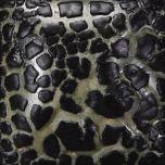 Black Mudcrack
