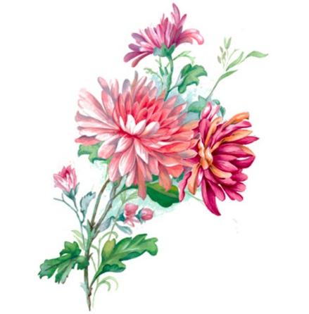 Krysantemum - 100 x 68 mm - 1 st.