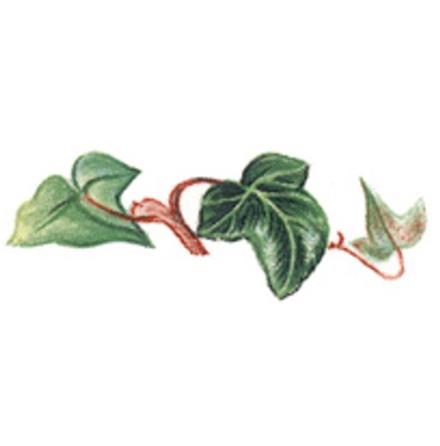 Murgröna - 40 mm - 5 st.