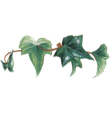 Murgröna - 70 mm - 5 st.