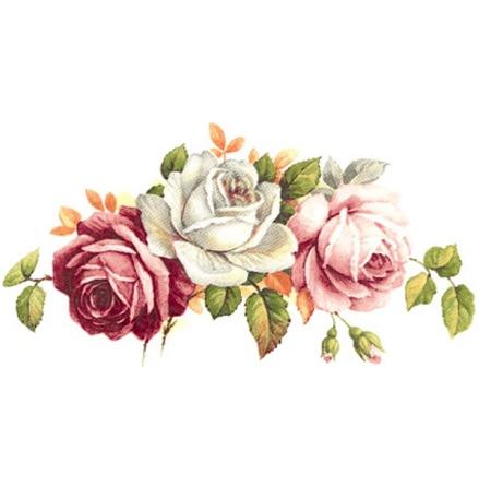 Rosa rosor - 75 mm - 5 st.