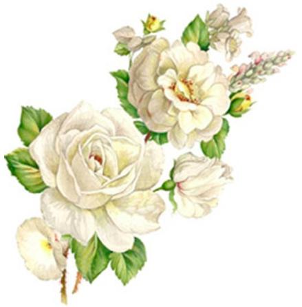 Vit blomsterprakt - 75 mm - 5 st.