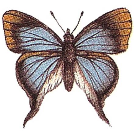 Blå fjäril - 30 mm - 5 st.