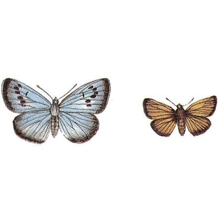 Fjäril & mal - 5 par