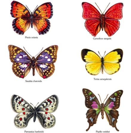 Glada fjärilar - set med 6 st.