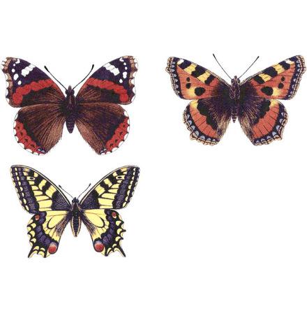 Olika fjärilar - 75 mm - set med 6 st.