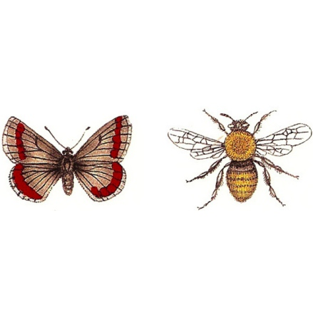 Röd fjäril & bi - 30 x 20 mm - 5 par