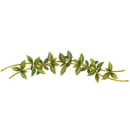Grön bård - 40 mm - 5 st.