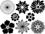 Blommor - Platina