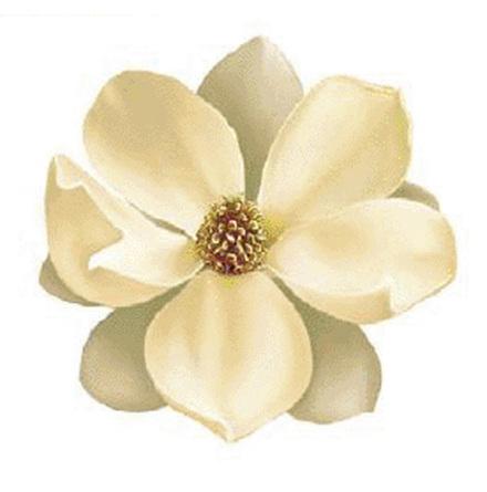 Magnolie 90 mm - 1 st.