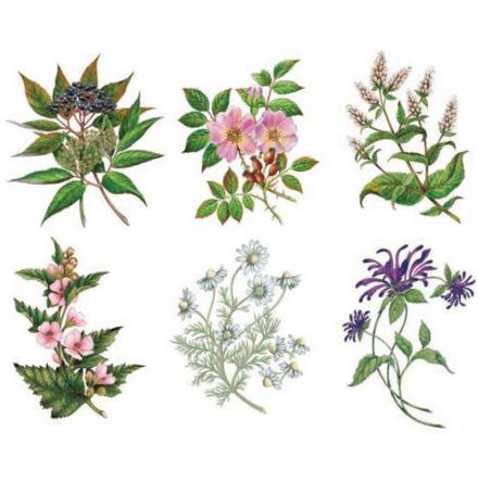 Te blommor - 85x60 mm - set av 6 st.